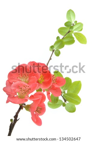 Plant background - stock photo