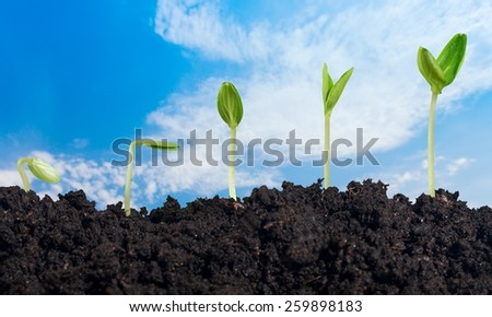 Plant, dirt, soil. - stock photo