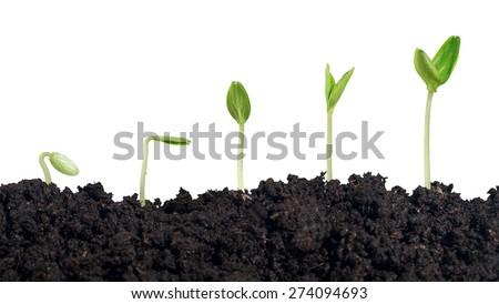 Plant, dirt, soil. - stock photo