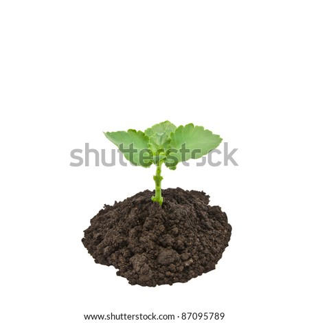 plant from the soil isolated on white background - stock photo