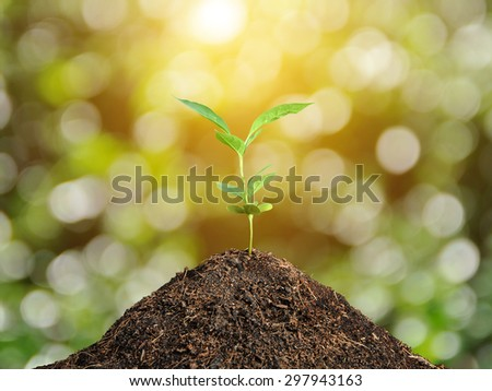 Plant grow and bokeh background , concept  - stock photo