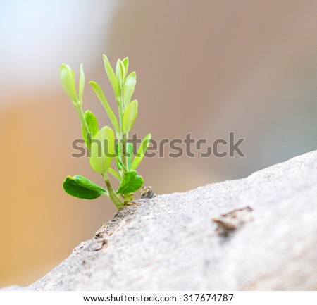 Plant growing - stock photo