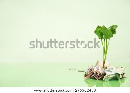 plant growing on coins  - stock photo