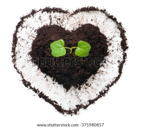 Plant growing out of a heart shaped soil. Sprout of morning glory flower (Ipomoea flower). Ecology concept to Earth day. - stock photo