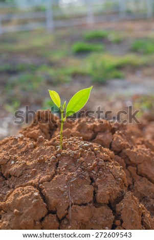 plant growing through crack in soil - stock photo