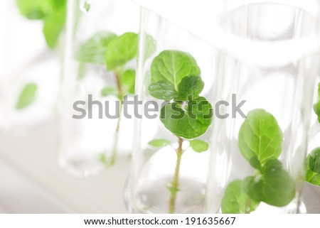 Plant grows in test tube - stock photo