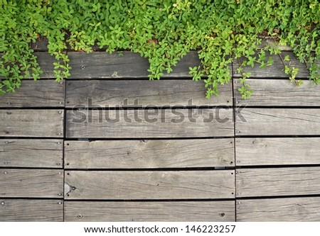 Plant growth on the old wooden background  - stock photo