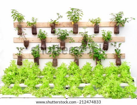 Plant herbs in pots hang on the wall. - stock photo