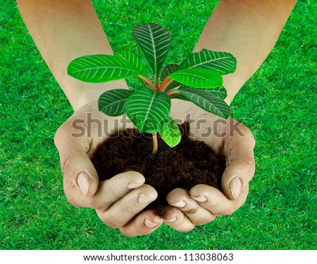 Plant in a hand isolated on the grass background - stock photo