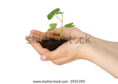 Plant in a hand of the child on an isolated background - stock photo