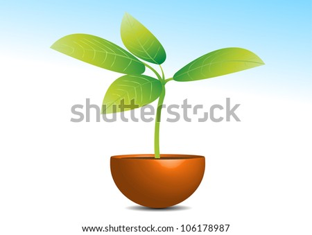Plant in a pot - stock photo