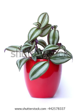 plant in a red pot - stock photo