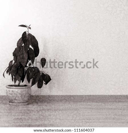 Plant in an empty room in vintage style - stock photo