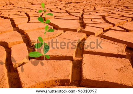 Plant in dried cracked mud - stock photo