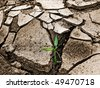 plant in dry land - stock photo
