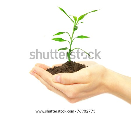 plant in female hands on white background - stock photo