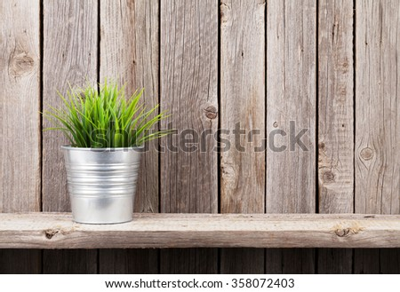 Plant in flowerpot on shelf against rustic wooden wall. View with copy space - stock photo