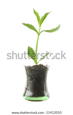 Plant in glass cup - stock photo
