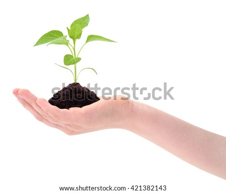 Plant in hand isolated on white background. - stock photo