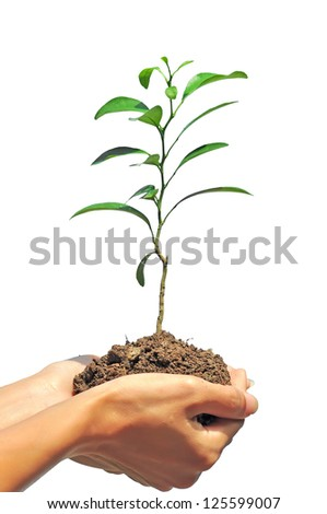 plant in hand on white background - stock photo