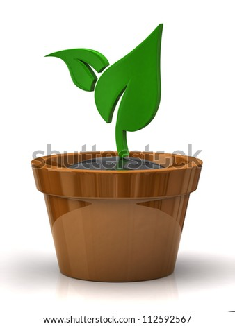 Plant in pot isolated on the white backgrounds - stock photo