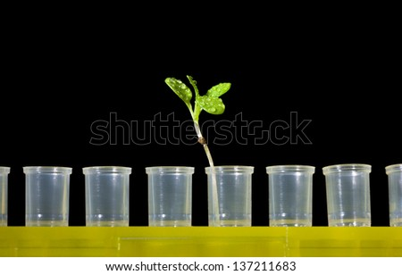 Plant in row of empty test-tubes isolated on black - gene manipulation concept  - stock photo