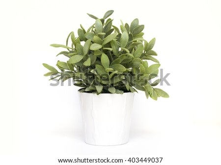 Plant in white pot - stock photo