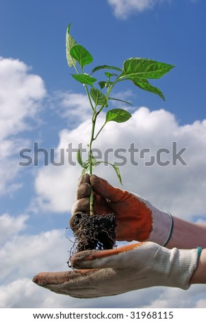 Plant in woman hands on sky background - stock photo