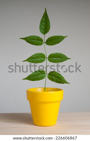Plant in yellow pot on wooden table. - stock photo