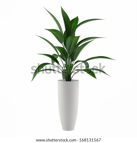 plant isolated in the pot - stock photo