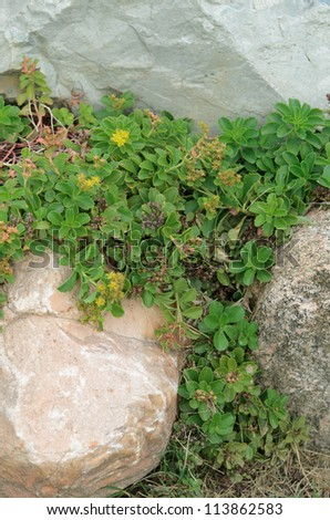 plant life grows between rocks - stock photo