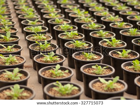 Plant nursery. - stock photo