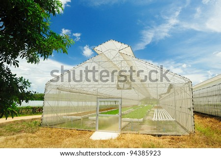 Plant nursery of organic vegetable - stock photo