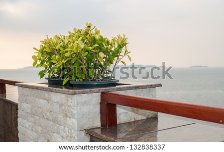 Plant over the sea - stock photo