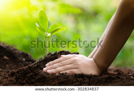 Plant,Planting,Growing,Seedling,Tree,Sunlight,Environment, Kid planting over green background - stock photo