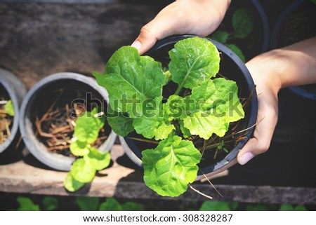 Plant Pot in Hands in vintage style. Organic garden at home - stock photo