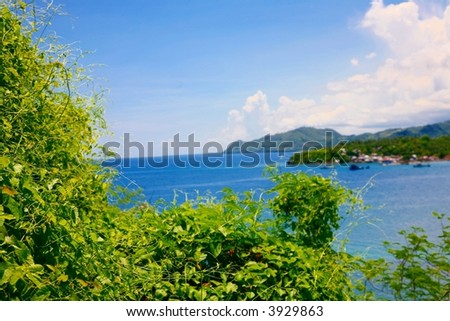 plant see and island - stock photo