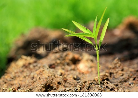 Plant sprout growing of soil. - stock photo