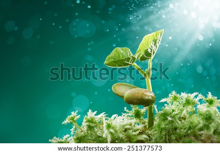 plant surrounded by moss with sunbeam shining on it - stock photo
