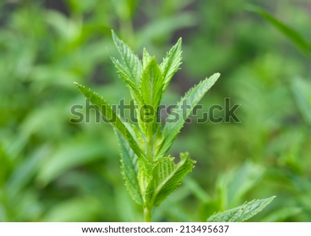 Plant twig on green background - stock photo