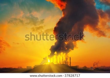 Plant with smoke under sunset light - stock photo
