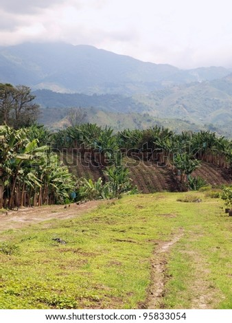 Plantation landscape. Growing plantains and coffee in mountains of Colombia. - stock photo