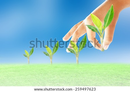planting a banana tree - stock photo