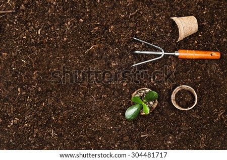 Planting a beautiful, green leaved plant on a natural, sandy background. Camera from above, top view. Natural background for advertisements. - stock photo