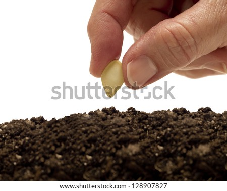 Planting A Seed Close Up Horizontal Shot  Focus On Seed In Hand - stock photo