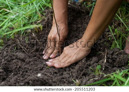 planting a tree with soil - stock photo