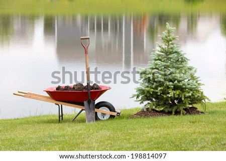 Planting an ornamental evergreen cypress or conifer on the bank of a tranquil lake with a wheelbarrow full of potting soil or manure and a spade standing on the manicured lawn - stock photo
