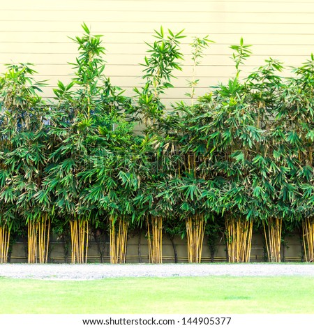 Planting bamboo wall, bamboo building a wall of heat. - stock photo