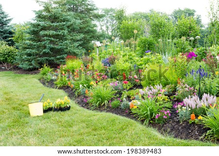 Planting colorful yellow celosia plants in a lush green landscaped garden with a neat wavy flowerbed filled with flowering plants and evergreen conifers - stock photo