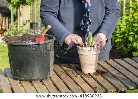Planting flowers into flower beds in the garden. Selective focus. - stock photo